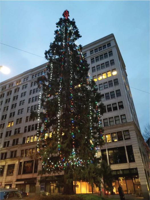 Westlake Center Christmas 2021 Christmas Tree Lighting Lights Inc